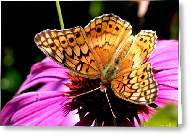 Butterfly On Coneflower-05 Greeting Card by Eva Thomas