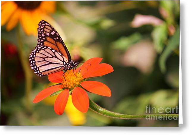 Butterfly On Flower 1 Greeting Card by Artie Wallace
