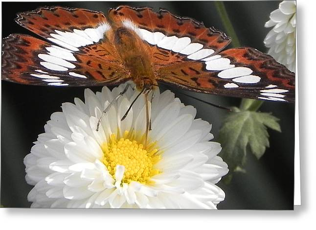 Butterfly On Flower Greeting Card by Arindam Raha