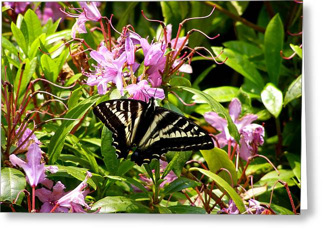 Butterfly On Flowers Greeting Card by Mark Caldwell