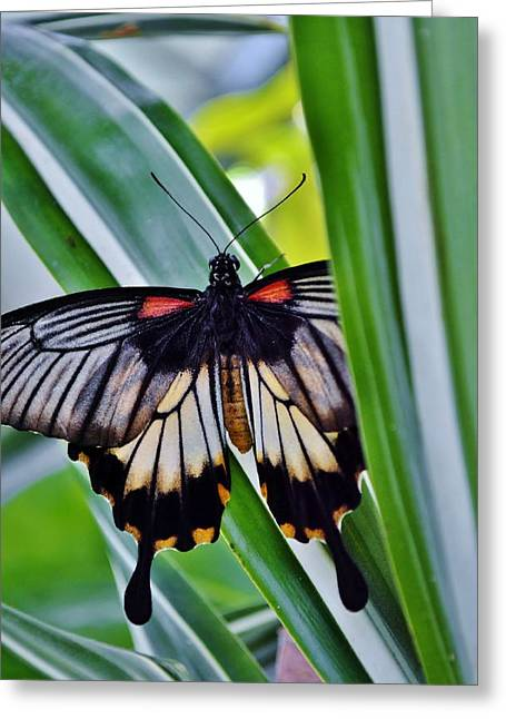 Greeting Card featuring the photograph Butterfly On Leaf by Werner Lehmann