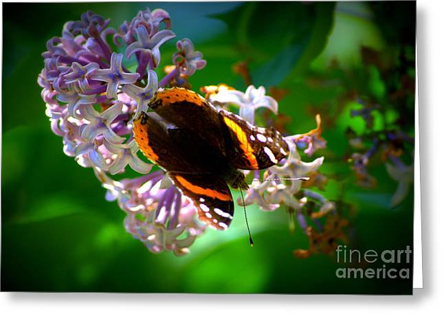Butterfly On Lilac Greeting Card by Kevin Fortier