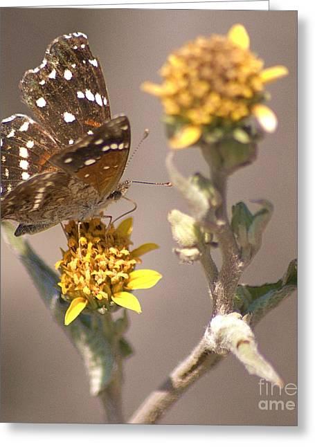 Greeting Card featuring the digital art Butterfly On Marigold 1 by John  Kolenberg