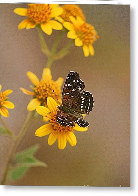 Greeting Card featuring the digital art Butterfly On Marigold by John  Kolenberg