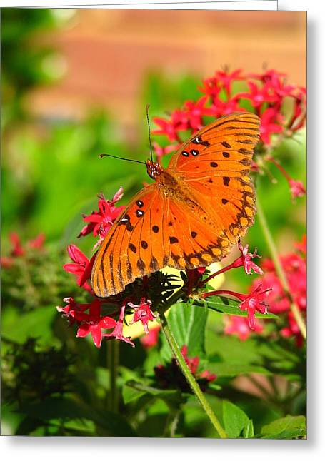 Greeting Card featuring the photograph Butterfly On Pentas by Carla Parris
