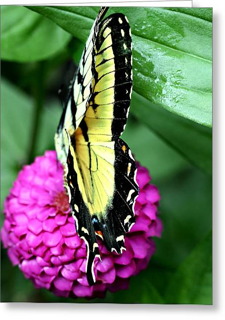 Butterfly On Pink Greeting Card by Susan Leggett
