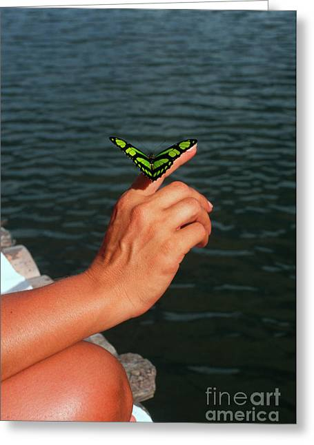 Butterfly On Woman's Hand Greeting Card