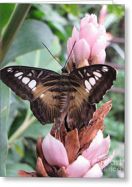 Butterfly Pavilion1 Greeting Card