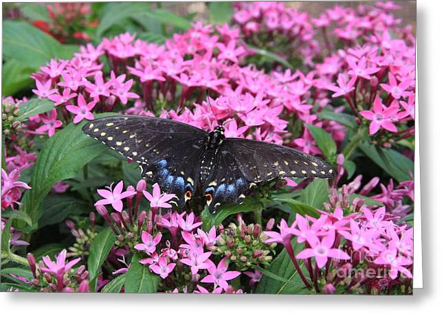 Butterfly Pinkflowers Greeting Card