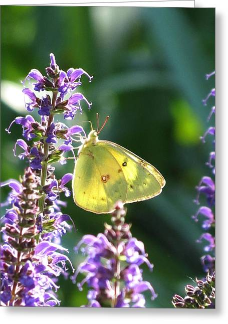 Butterfly Greeting Card by Rebecca Overton