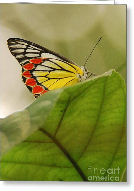 Greeting Card featuring the photograph Butterfly Resting by Fotosas Photography