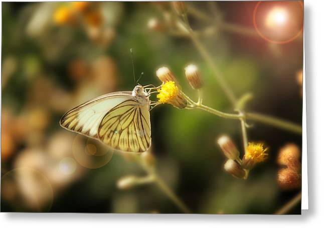 Butterfly Greeting Card by Sergey Nassyrov