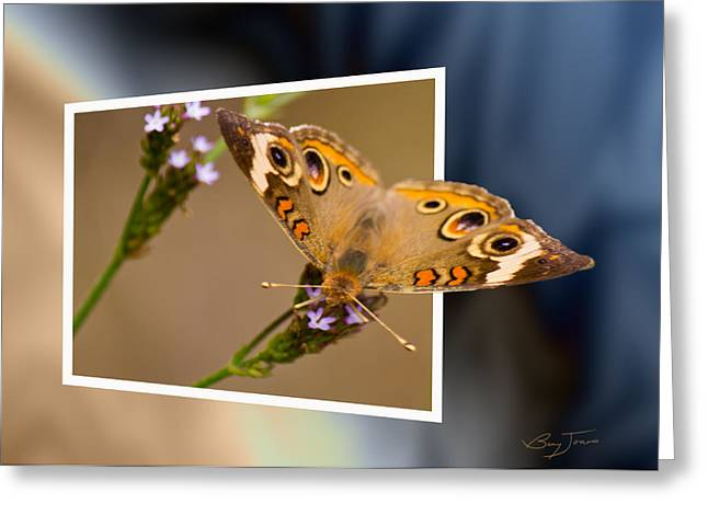 Butterfly Stepping Out Greeting Card by Barry Jones