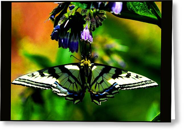 Greeting Card featuring the photograph Butterfly Upside Down On Comfrey Flowers by Susanne Still