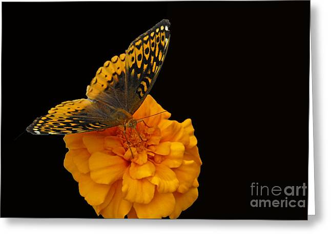 Greeting Card featuring the photograph Butterfly Visitor by Cindy Manero