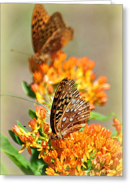 Butterfly Weed 2 Greeting Card by Marty Koch