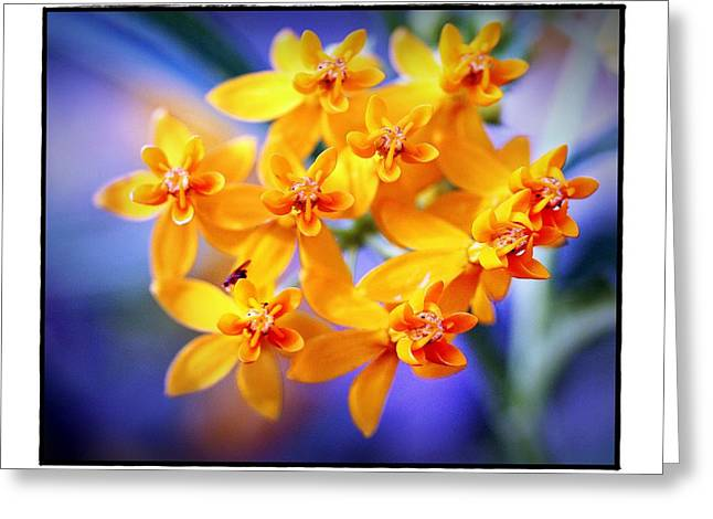 Butterfly Weed Greeting Card by Judi Bagwell