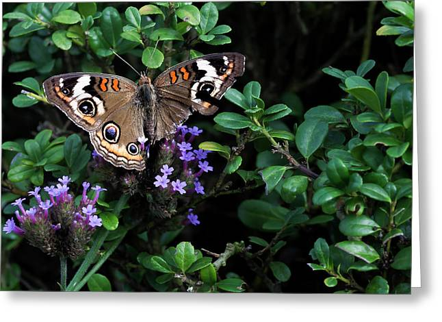 Butterfly With Torn Wings Greeting Card by Robert Ullmann