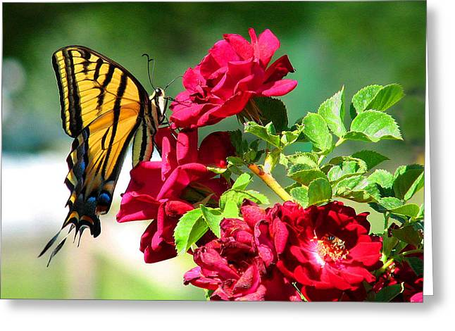 Butterflyrose Greeting Card