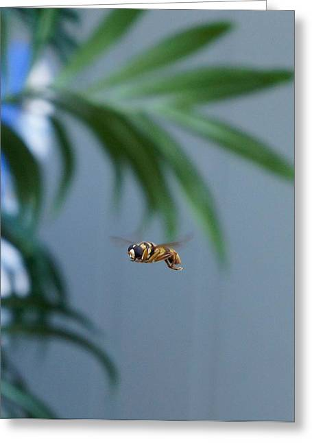 Buzz Of The Hover Fly Greeting Card