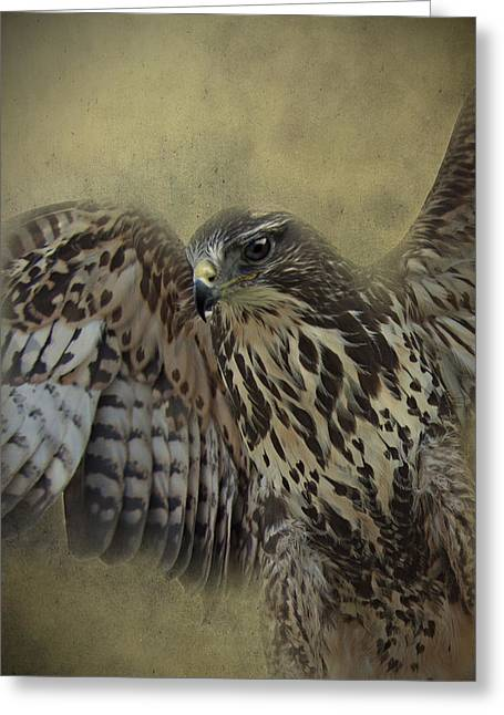 Greeting Card featuring the photograph Buzzard Preparing To Fly by Ethiriel  Photography