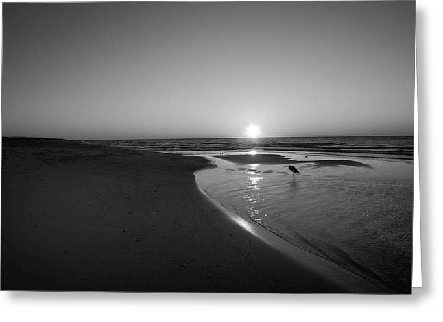 Bw Sunrise With Heron In Pond Greeting Card by Michael Thomas