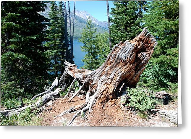 Greeting Card featuring the photograph By Jenny Lake by Dany Lison