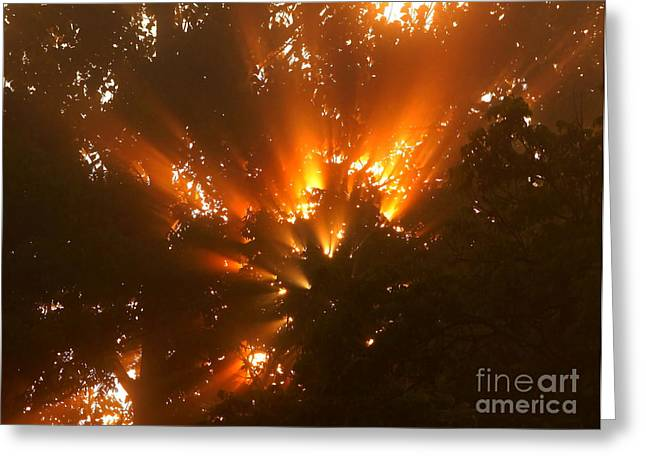 By The Dawns Early Light Greeting Card by Marjorie Imbeau