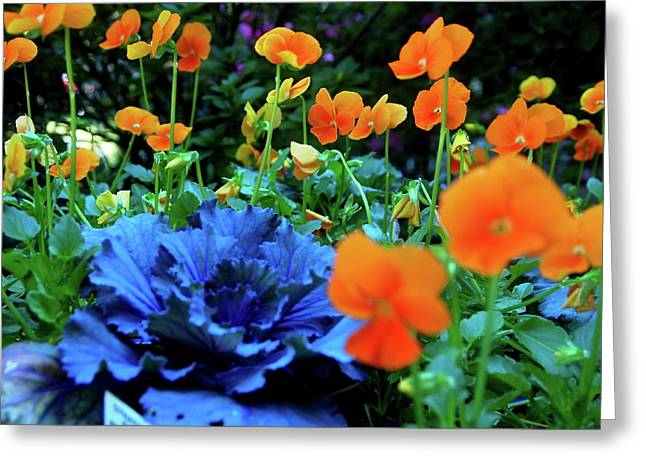 Cabbage And Viola's Greeting Card by Laura  Grisham