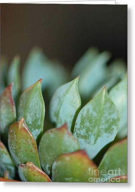 Cactus 2 Greeting Card by Melissa Haley