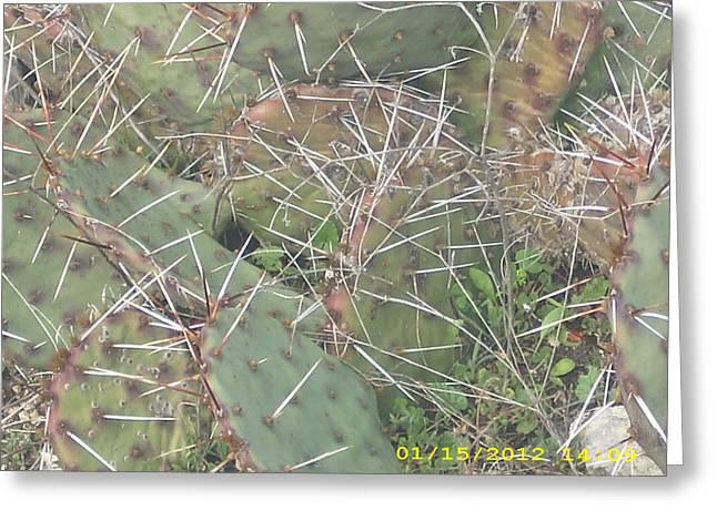 Cactus Greeting Card by Anna Stearman