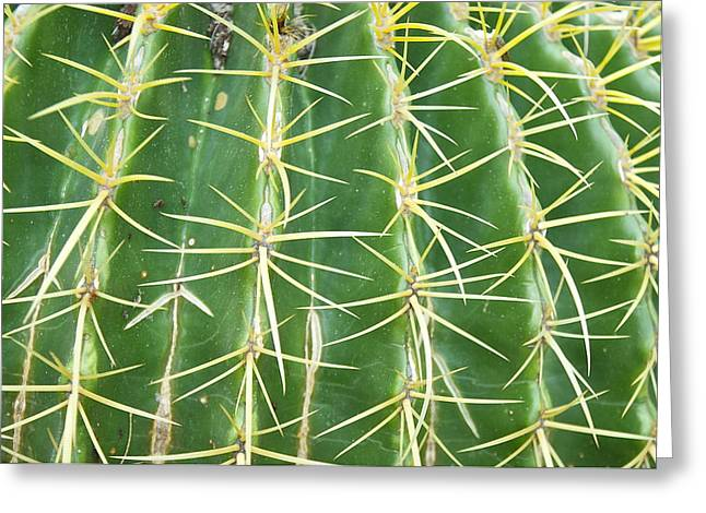 Cactus Close Trouble Greeting Card by Dietrich Sauer