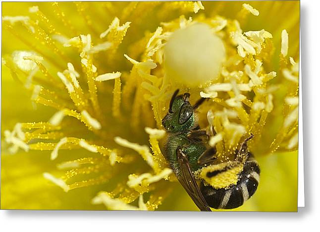 Cactus Flower And Bee Greeting Card