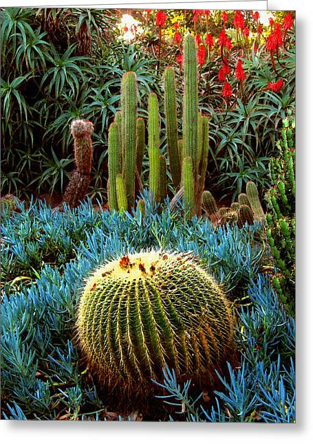 Cactus Gardens Greeting Card by Timothy Bulone