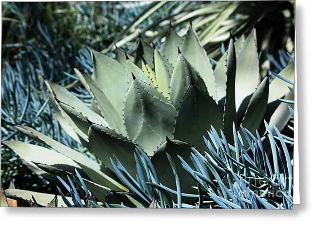 Cactus Greeting Card by Marjorie Imbeau
