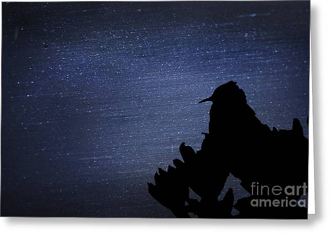 Cactus Wren In The Night Greeting Card by Donna Greene