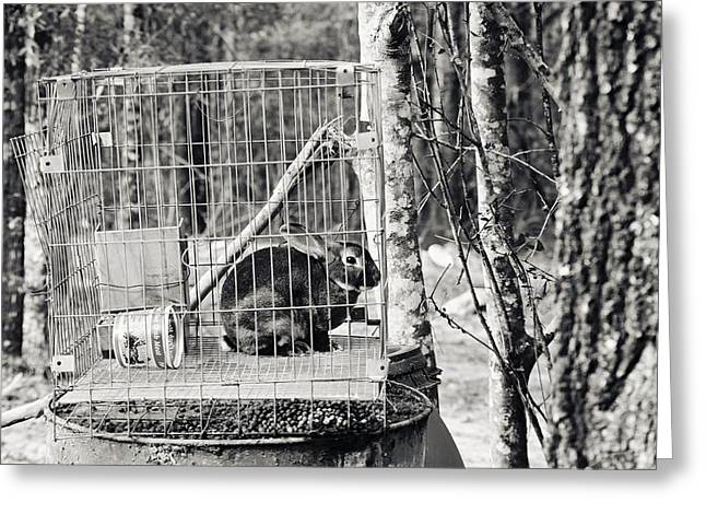 Caged Rabbit Greeting Card by Floyd Smith
