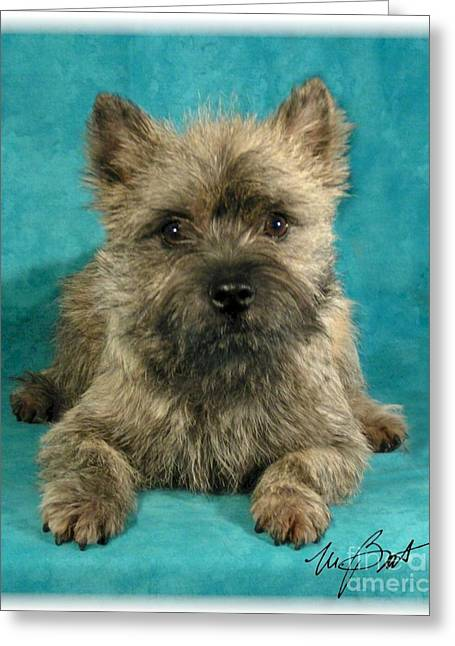 Cairn Terrier Pup Greeting Card by Maxine Bochnia