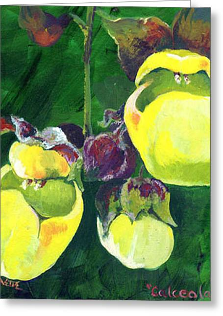 Calceolaria Greeting Card by Raette Meredith