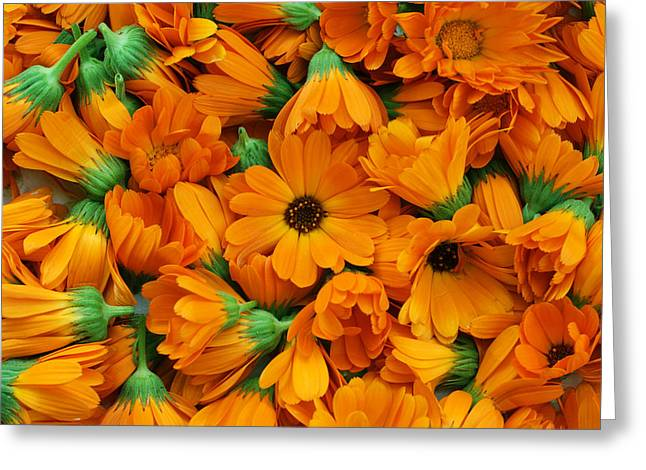 Greeting Card featuring the photograph Calendula Flowers by Aleksandr Volkov