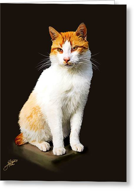 Calico Greeting Card by Tom Schmidt