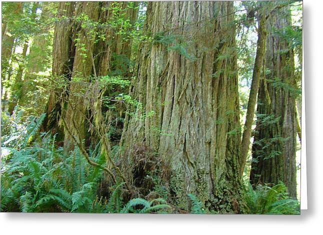 Califorina Coastal Redwood Trees Art Prints Greeting Card by Baslee Troutman