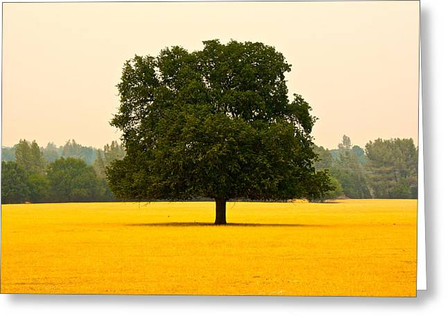 California Oak Greeting Card