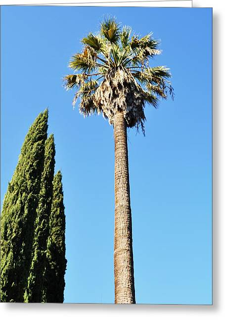 California Palm Greeting Card by Todd Sherlock