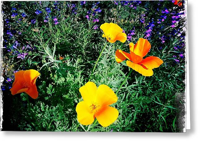 Greeting Card featuring the photograph California Poppy by Nina Prommer