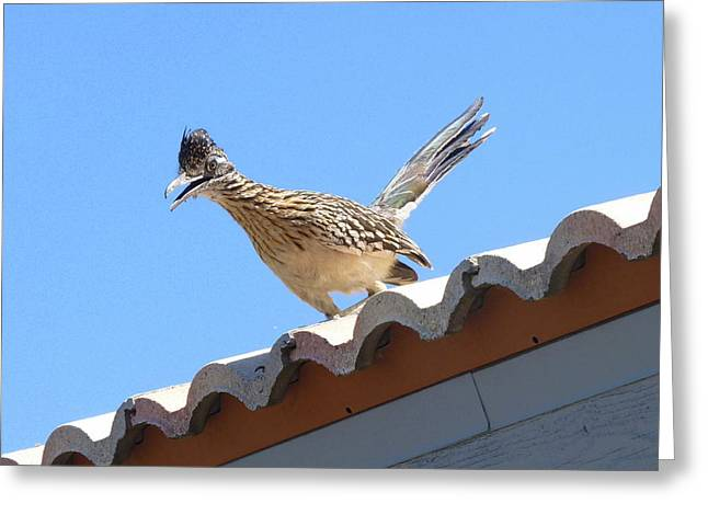 Greeting Card featuring the photograph California Roadrunner by Carla Parris