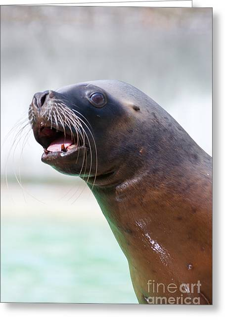 California Sea Lion Greeting Card by Andrew  Michael