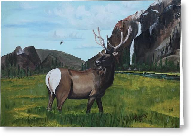Call Of Nature Greeting Card by Carolyn Ardolino