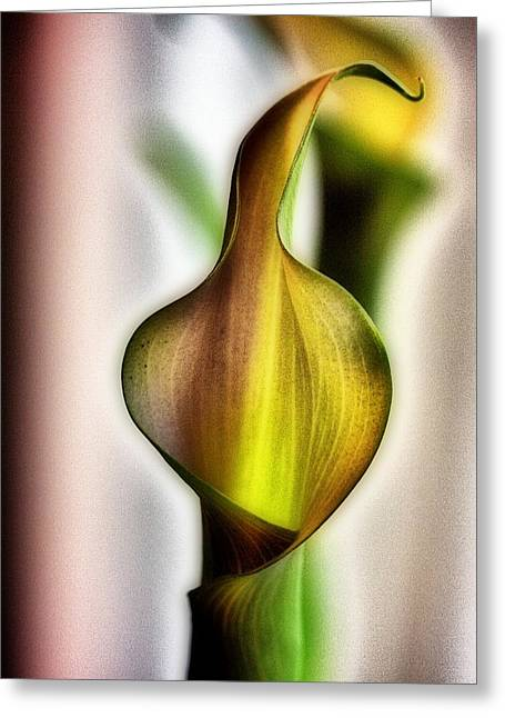 Calla Greeting Card by Jennifer Woodworth