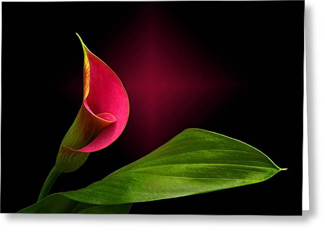 Greeting Card featuring the photograph Calla Lily by Judy  Johnson